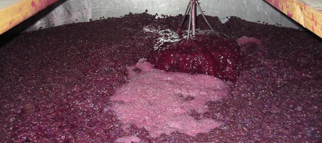 i10876-mosto-vino-631