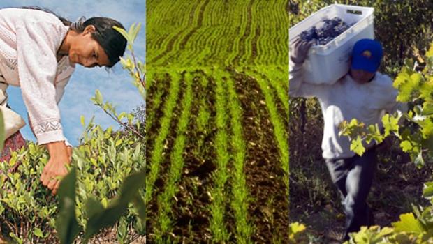 Productores agropecuarios: empeorará la economía en2015