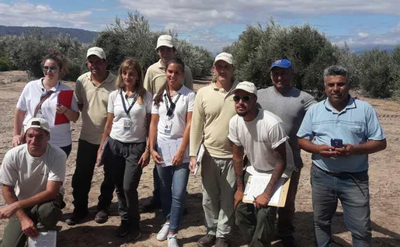 El Renatre relevó la situación registral de más de 650 trabajadores del sector olivícolariojano